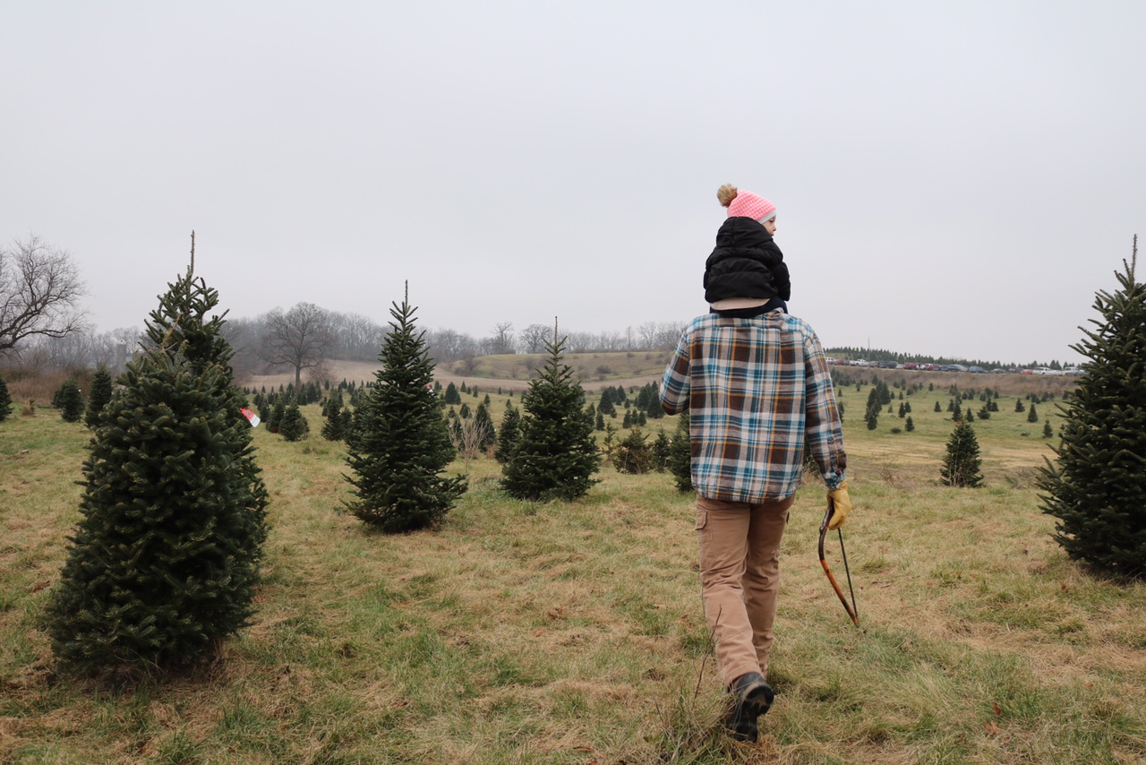 Cut Your Own Christmas Tree - Hanns Christmas Farm Wisconsin